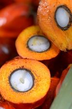 Little of the palm fruit is wasted as the kernel and flesh are both used to produce oil.