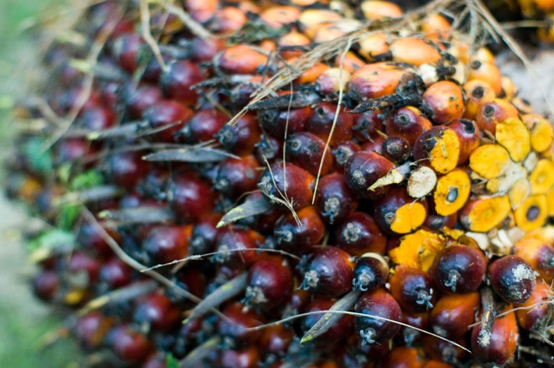 Palm oil: the most productive vegetable oil crop in the world