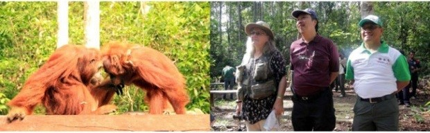 Two orangutans Tyson and Eka were released in December 2015, witnessed by representatives from OFI and GAR/SMART