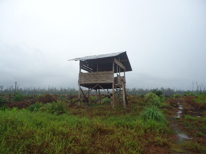 An illegal structure on conservation land in Aceh
