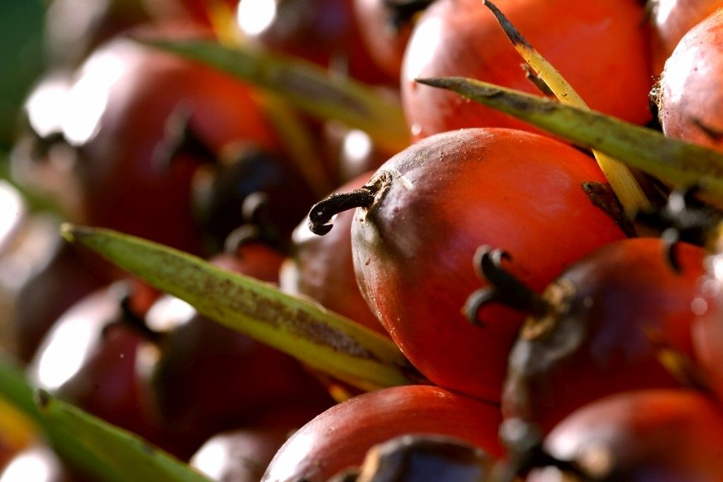 palm fruit oil how to remove pesticides from fruits