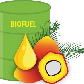 graphic of biofuels drum with oil palm fruits