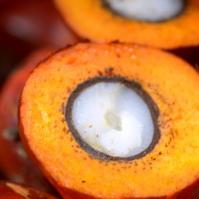 close up of open palm fruit