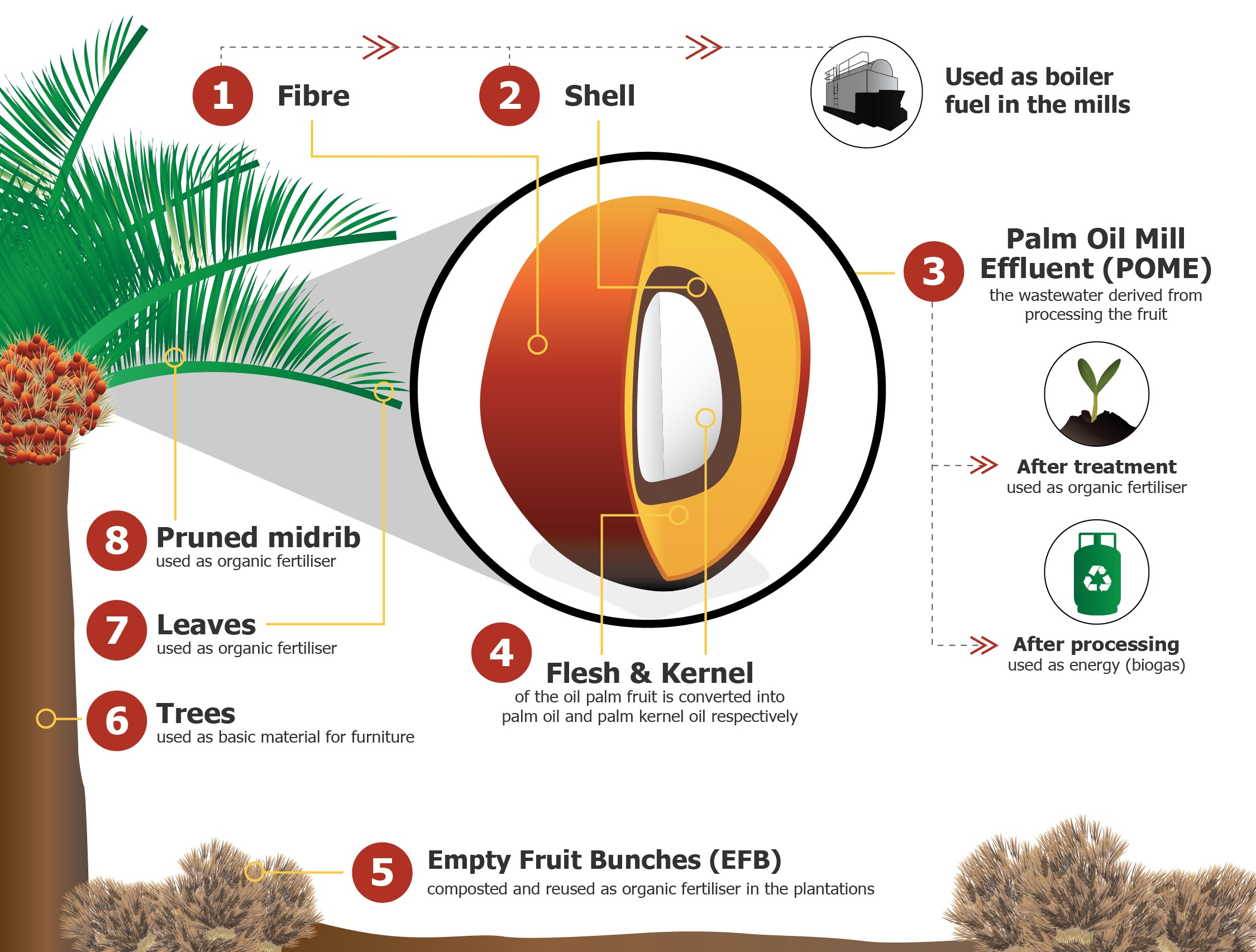 Zero Waste Of The Palm Oil Fruit Golden Agri Resources