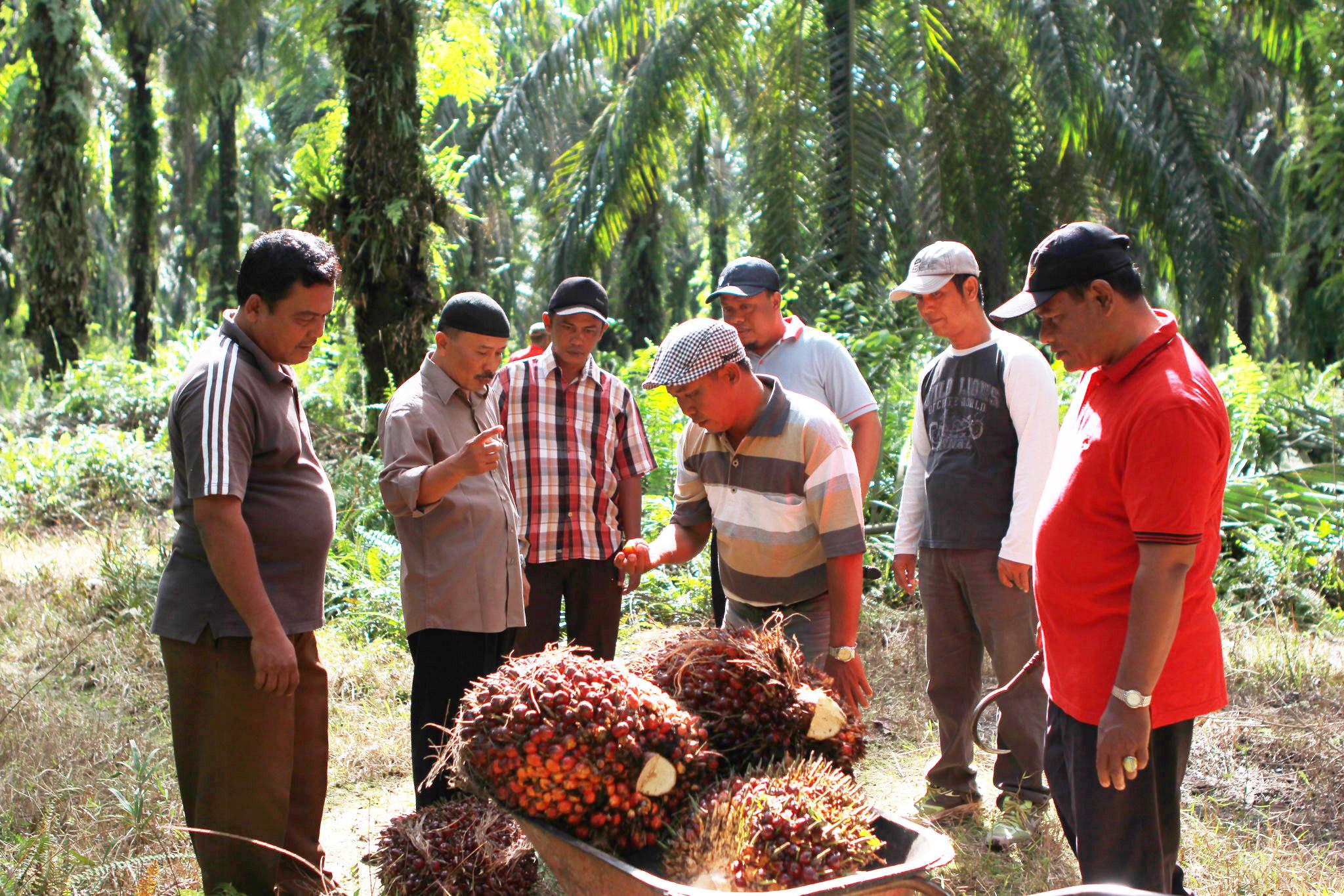 Support for smallholder
